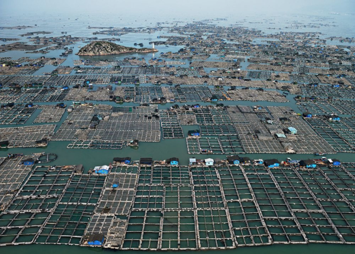 Chinese fish farm